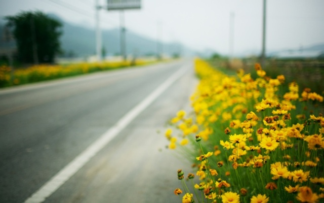 Wallpaper: Roadside by fiftyfootshadows